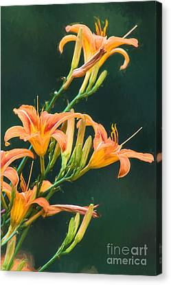 Finger Lakes Canvas Print - Tiger Lillies by Michele Steffey