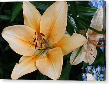 Canvas Print featuring the photograph Tiger Lily by Dora Sofia Caputo Photographic Art and Design