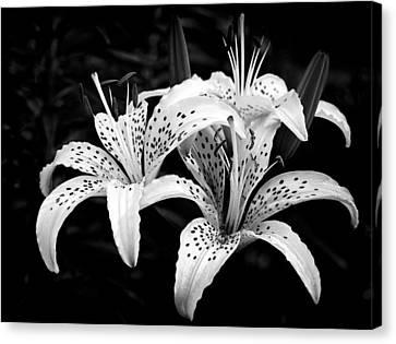 Tiger Lily I Canvas Print by Jeff Burton