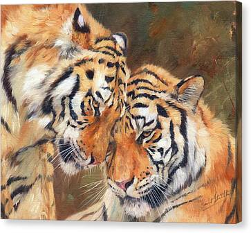 Tiger Canvas Print - Tiger Love by David Stribbling