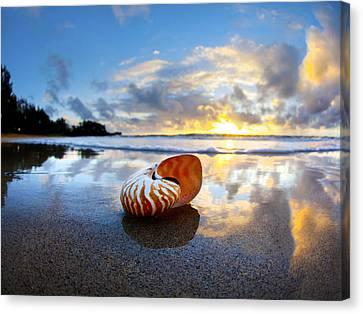 Tiger Nautilus Sunrise Canvas Print by Sean Davey