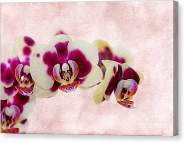 Tiger Orchid Canvas Print by Svetlana Sewell