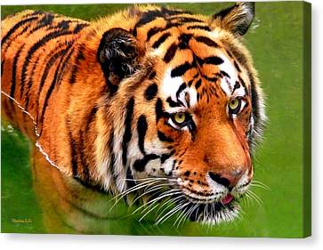 Tiger Painting Canvas Print by Christina Rollo