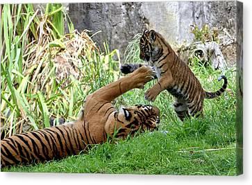 Tiger Play Canvas Print