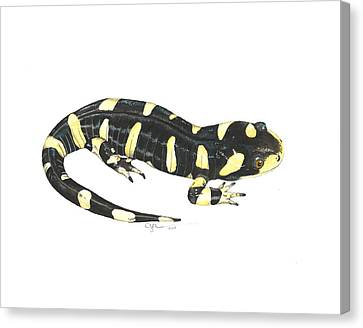 Tiger Salamander Canvas Print