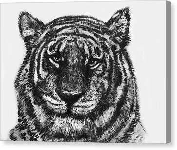 Canvas Print featuring the painting Tiger by Shabnam Nassir
