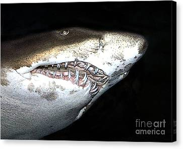 Tiger Shark Canvas Print by Sergey Lukashin