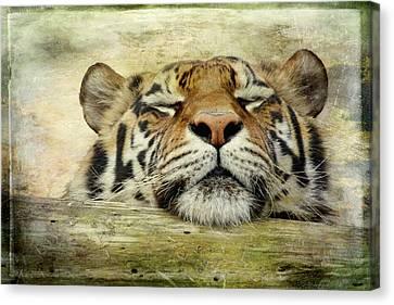 Tiger Snooze Canvas Print by Athena Mckinzie