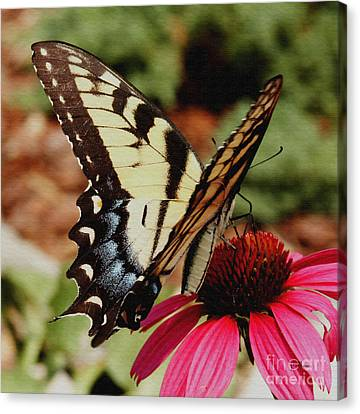Canvas Print featuring the photograph Tiger Swallowtail  by James C Thomas