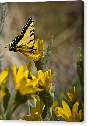 Canvas Print featuring the photograph Tiger Swallowtail Butterfly by Janis Knight