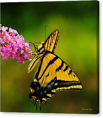 Tiger Swallowtail Butterfly Canvas Print by Karen Slagle
