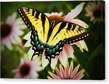 Tiger Swallowtail Butterfly Canvas Print by Michael Porchik