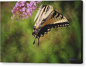 Tiger Swallowtail-featured In Photography And Textures And Harmony-happiness Groups Canvas Print by EricaMaxine  Price