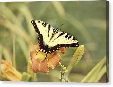 Tiger Swallowtail Canvas Print by Kim Hojnacki