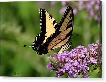 Tiger Swallowtail On Butterfly Bush 2 - Featured In 'comfortable Art' And 'flower W Co' Macro Groups Canvas Print by EricaMaxine  Price