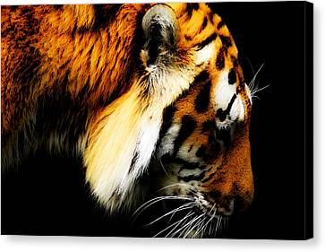 Tiger  Thinking Canvas Print by Tommytechno Sweden