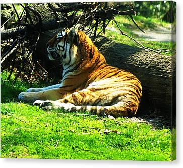 Tiger Too Canvas Print by B Wayne Mullins