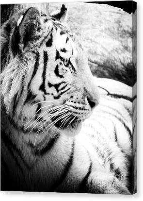 Canvas Print featuring the photograph Tiger Watch by Erika Weber