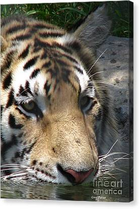 Tiger Water Canvas Print by Greg Patzer