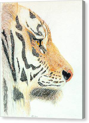 Canvas Print featuring the drawing Tiger's Head by Stephanie Grant
