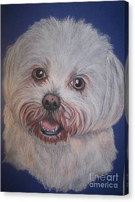 Tilly Canvas Print by Julie Hull