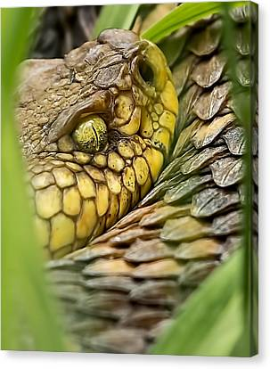 Timber Rattler In The Grass Canvas Print