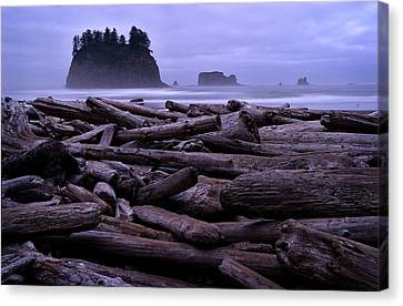 Timber Canvas Print by Robert Charity