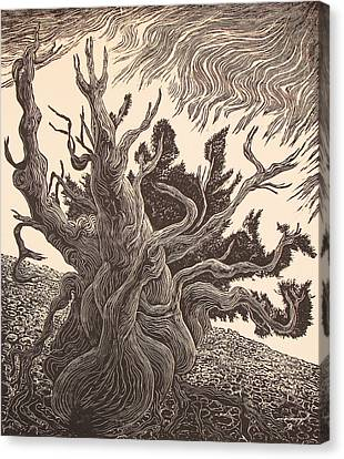 Timberline Traveler Canvas Print by Maria Arango Diener