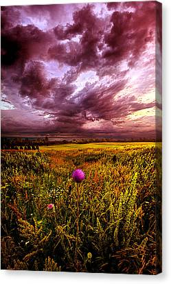 Thistle Canvas Print - Time And Again by Phil Koch