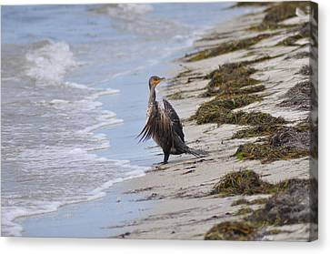 Time For A Bath Canvas Print by Bill Cannon