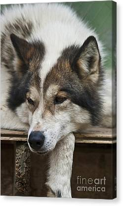 Time For A Rest Canvas Print by Heiko Koehrer-Wagner