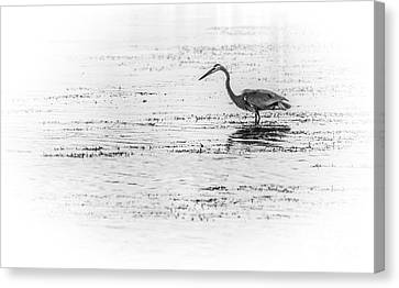 Sea Birds Canvas Print - Time For Fast Food by Marvin Spates