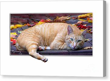 Canvas Print featuring the photograph Time For Lunch Yet? by Mariarosa Rockefeller