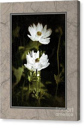 Canvas Print featuring the photograph Timeless Two by Darla Wood