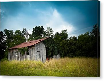 Tin Roof...ivy Covered Barn Canvas Print by Shane Holsclaw