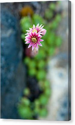 Canvas Print featuring the photograph Tiny Blossom by Erin Kohlenberg