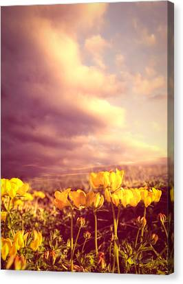 Tiny Flowers Canvas Print by Bob Orsillo