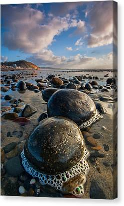 Tiny Giants Canvas Print by Peter Tellone
