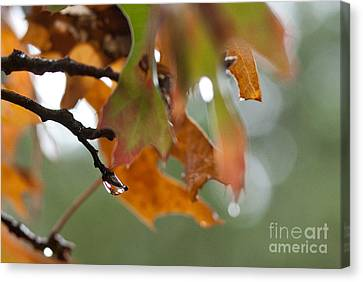 Tiny Leaf Canvas Print by Barbara Shallue