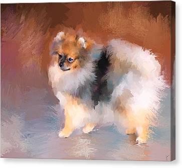 Tiny Dogs Canvas Print - Tiny Pomeranian by Jai Johnson