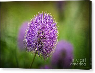 Tiny Purple Wildflower Canvas Print