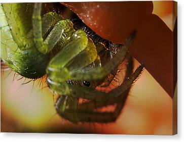 Insects Canvas Print - Tiny Spider by Mr Bennett Kent