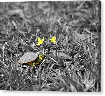 Slider Canvas Print - Tiny Turtle Selective Color by Al Powell Photography USA