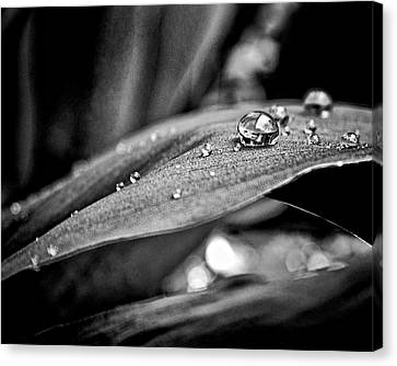 Canvas Print featuring the photograph Tiny Worlds 3 by Brian Carson