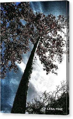 Tippy Top Tree II Art Canvas Print