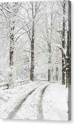 Into The Snowy Woods Canvas Print by Marianne Campolongo