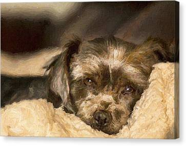 Tired Puppy Canvas Print