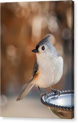 Jamesbarber Canvas Print - Titmouse by James Barber