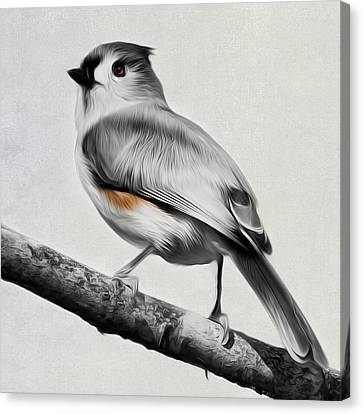 Titmouse Square Canvas Print by Bill Wakeley