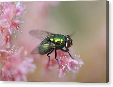 To Be A Fly On A Wall Canvas Print by Julie Smith